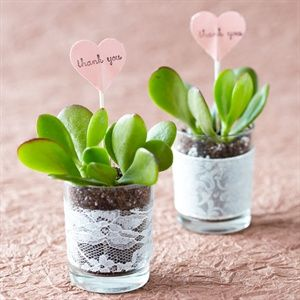 As a favor, the couple gave each guest a plant to bring home and grow: a succulent in a lace-wrapped glass pot.