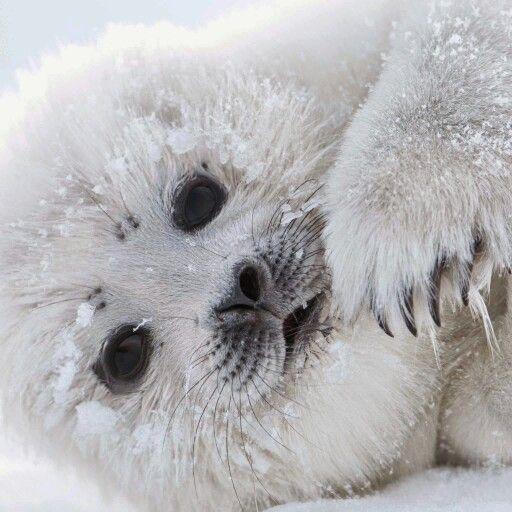 Eisbaerchen