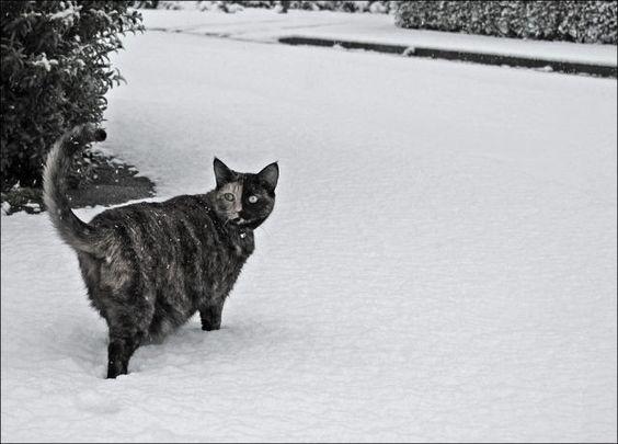 [cats-play-snow-2%255B2%255D.jpg]