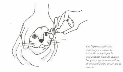 Remedios caseros: conjuntivitis | El cuidado de tu gato