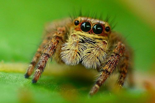 Today we join NASA in mourning the loss of a spider. Not just any spider -- a space-traveling spider.