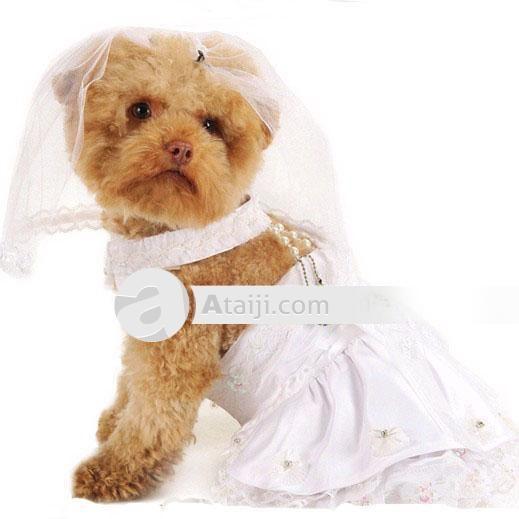 Vestido de Noiva adorável cão