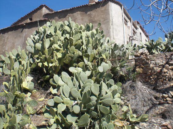 Cortijo Las Paces Fondón Alpujarra Almeria