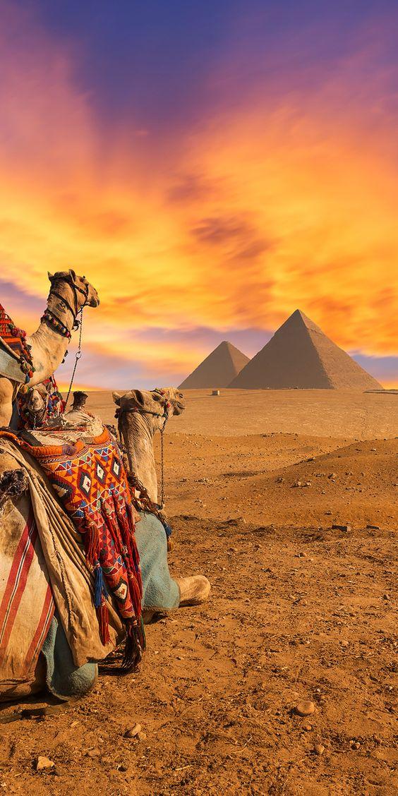 2016 - Pyramids of Giza - Afrika - Egypte - weer/klimaat - 2 kamelen rusten met piramides op achtergrond