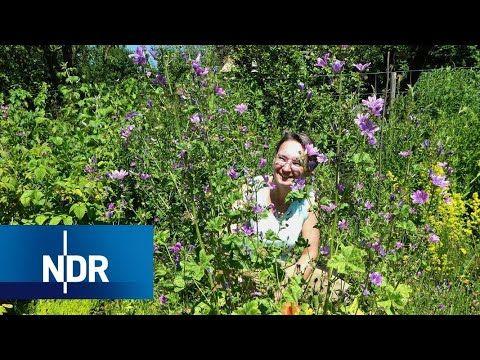 Geheimnisse Des Naturgartens Naturnah Ndr Doku Youtube In 2020 Naturgarten Garten Natur