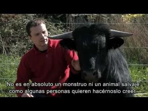 Enrique Peña Nieto: Alto a las corridas de toros en México
