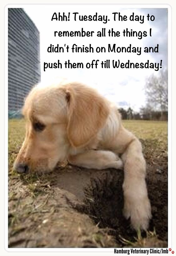 Tuesday funny  | Animal humor | Cute dog | Putting things off till tomorrow | blasé attitude | Procrastination:  Procrastination ever so quickly creeps in!