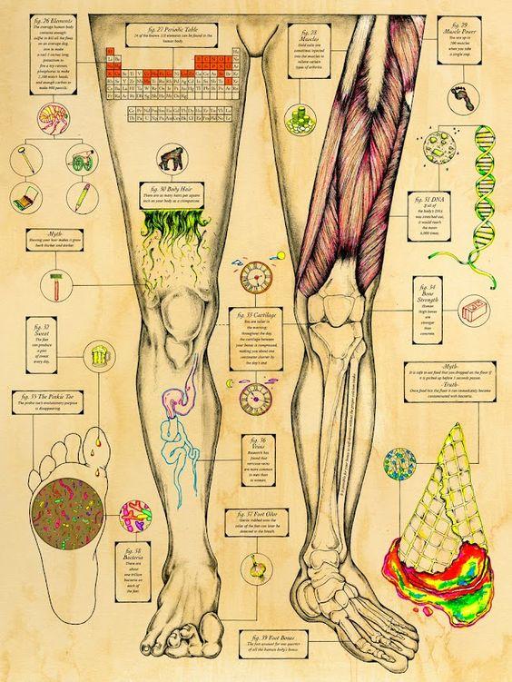 Kelsey Niziloek infografía piernas