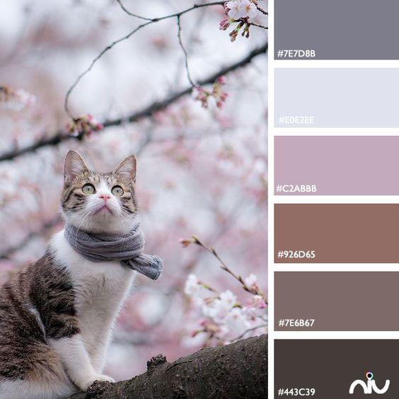 Kitty (fauna)