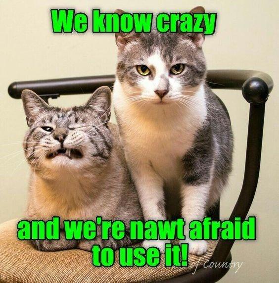 Top 25 Memes Of The Week Cheezburger Users Edition 177 In 2021 Funny Cats Funny Cat Memes Cat Memes