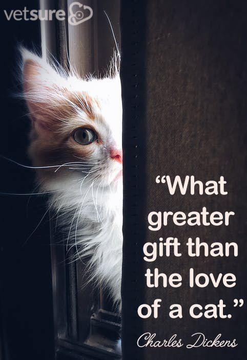 Charles Dickens What Greater Gift Than The Love Of A Cat Tuesdaythought Introducing A New Cat How To Introduce Cats Cats