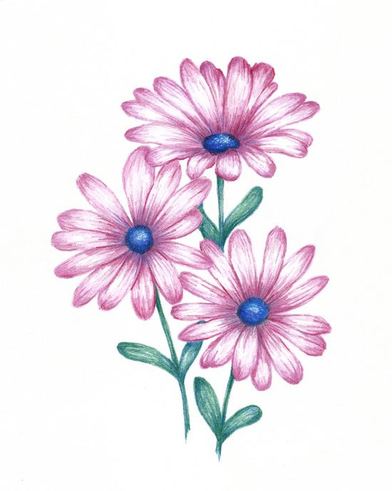 Flowers For > Daisy Flower Drawings With Color | Painting ...