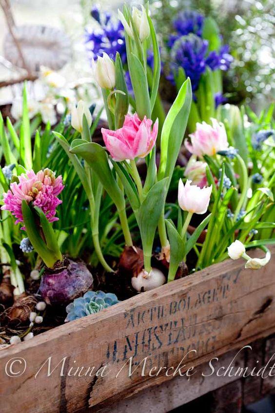 Preparer une jardiniere de bulbes de printemps mon automne pinterest caisses en bois - Jardiniere de fleurs ...