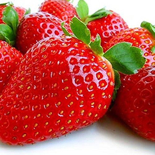 30 Albion Everbearing Strawberry Plants Fruits Firm Very Sweet High Yields With Images Everbearing Strawberries Strawberry Plants