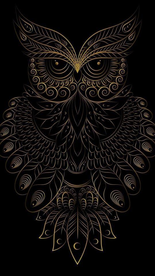 Coruja Arte Vitral Tato Burung Hantu Tato Burung Seni Kaligrafi Full hd black owl wallpaper