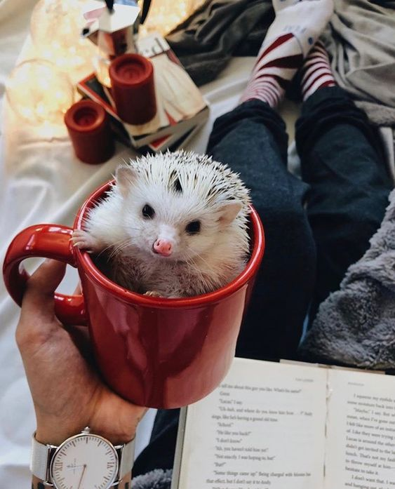A mug of adorability.  #adorable #cute