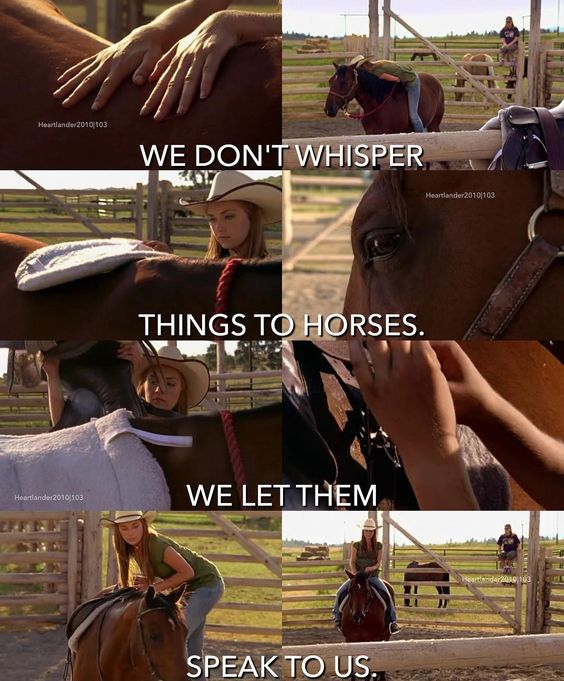 I love this movie!!!!Its called Heartland. Also 100% TRUE!!!!