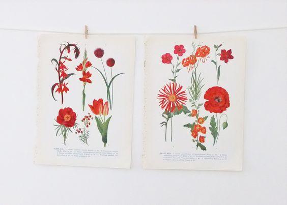 Vintage Flower Illustrations - floral prints in reds via Etsy #peonyandthistle