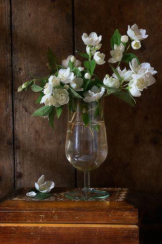 Николай Панов - Жасмин http://store.35photo.ru/buy/?oId=10472&id-print=0 Цветочный натюрморт с простым букетом белых цветов жасмина в стакане воды на фоне деревянной стены, освещенной дневным светом летом в деревне