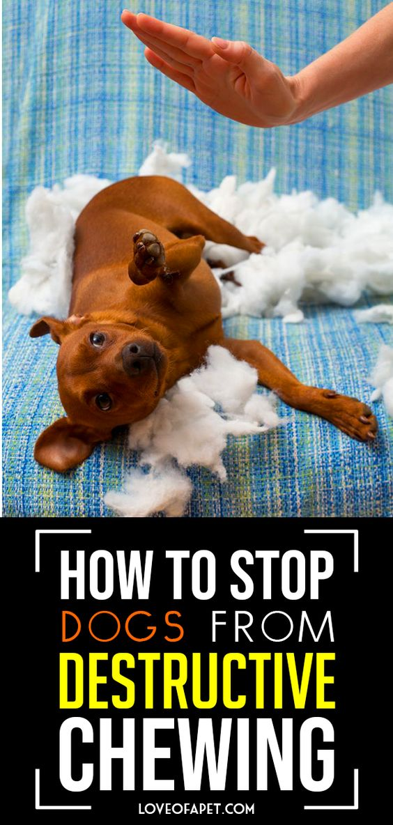 How To Stop Dogs From Destructive Chewing 11 Tips Dog Behavior Problems Dogs Dog Behavior