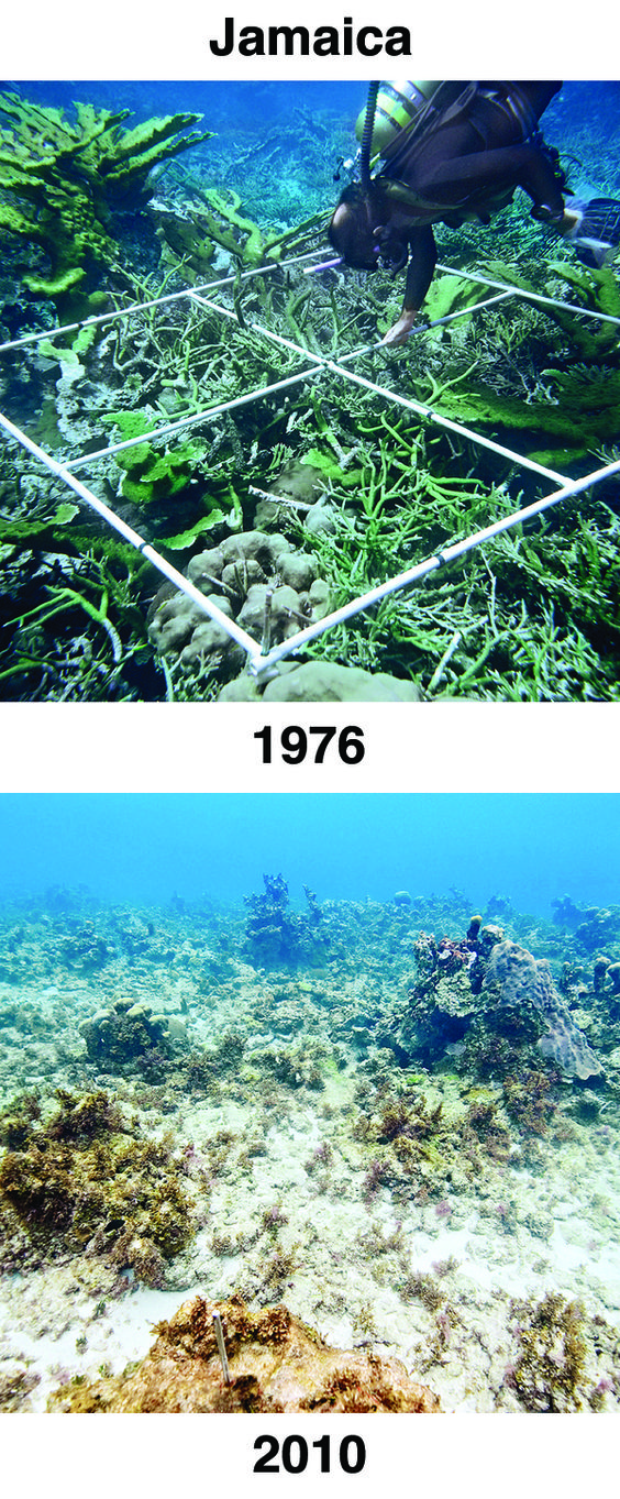 The powerful before-and-after photographs below were shared as evidence of ocean acidification at the 2012 International Coral Reef Symposium in Australia. Please help spread awareness about ocean acidification by pinning these before-and-after photos and starting the conversation about ocean conservation. #OceanAcidification: