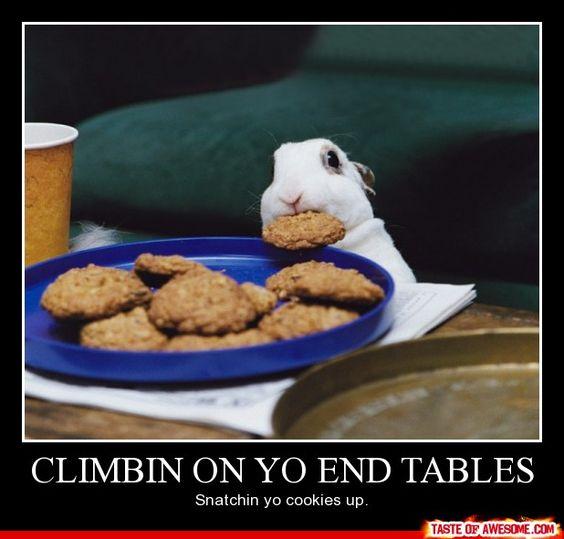 Hide your wife, hide your cookies...