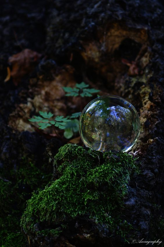 Crystal Ball, Bubbles And Forests On Pinterest