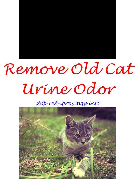 Cat Spray Water Cat Spray Male Cat Spraying Cats