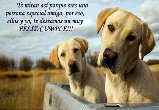En Este Día Especial Te Comparto Una Imagen Bonita De Cumpleaños Con Nuestros Amigos Los Perros Si Buscas Imagenes De Perros Perros Frases Feliz Cumple Perros