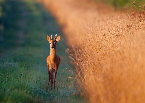 Best #wildlife photos by national geographic society