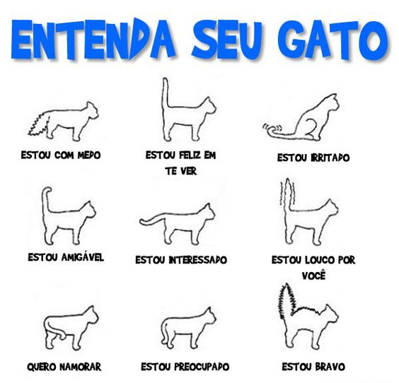 Entenda os sinais do seu gato.