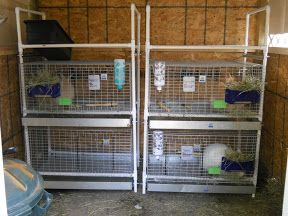 Pinterest the world s catalog of ideas for How to make a rabbit hutch from scratch