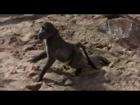 Animais Bêbados de Amarula