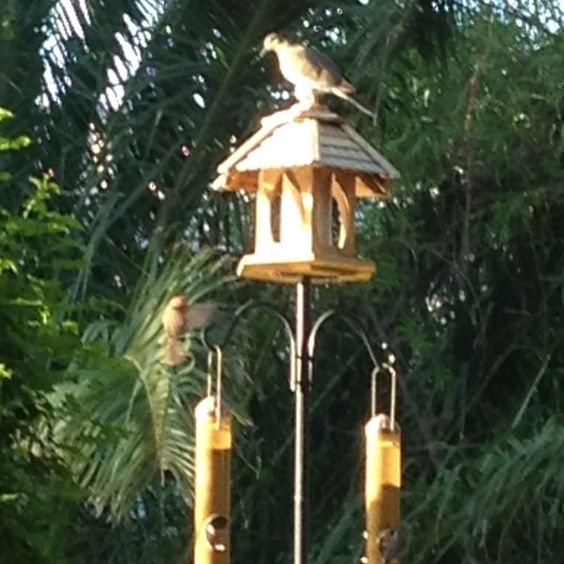 So many birdies in the garden. Such beautiful sight is priceless.