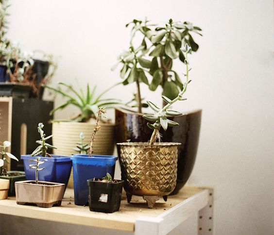 all the mountains...: Plants Can, Plants In Pots, Flowers Plants, Home Plants, Mountains Plants, Flower Pots, Garden Plants, Indoor Plants,  Flowerpot