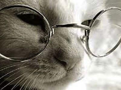 cuidados-del-gato-anciano