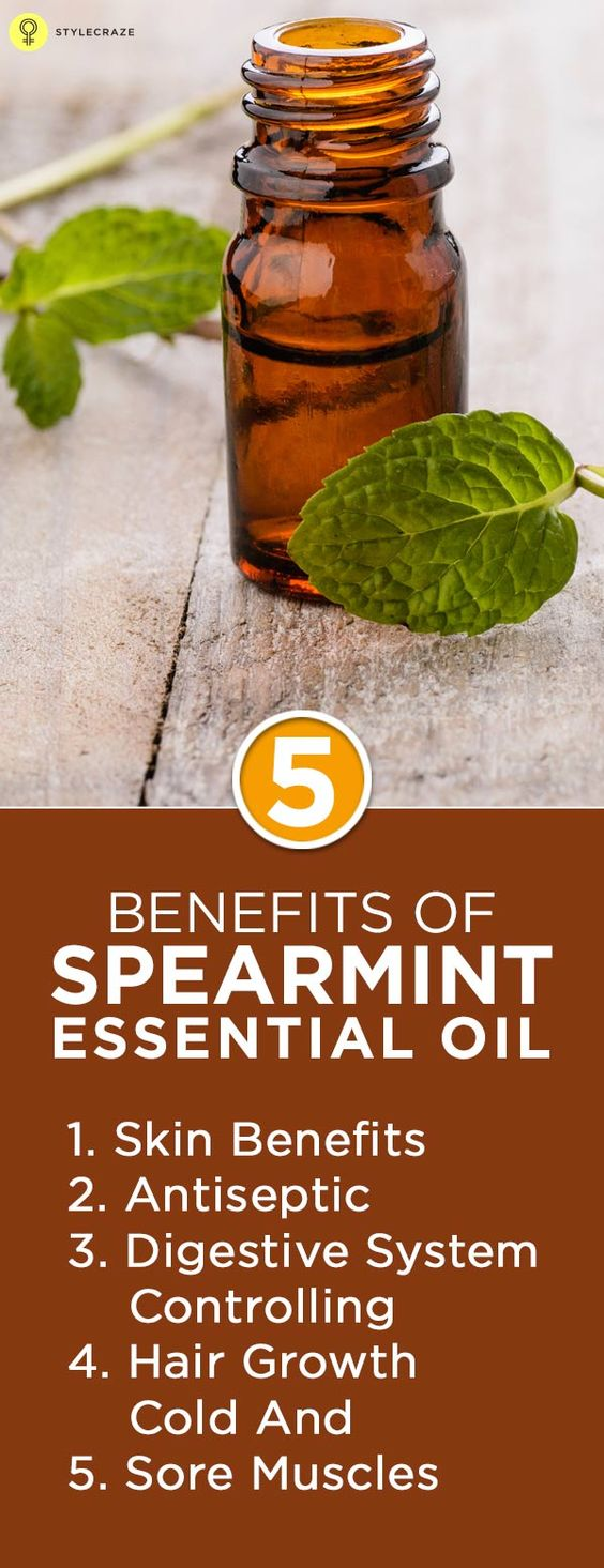 Did you know that some of the chewing gum that you are so fond of contains spearmint oil? And that although spearmint essential oil is not as ..