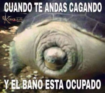 39 Trendy Memes Mexicanos Groseros Memes Graciosos Memes De Risa Memes Graciosos De Borrachos