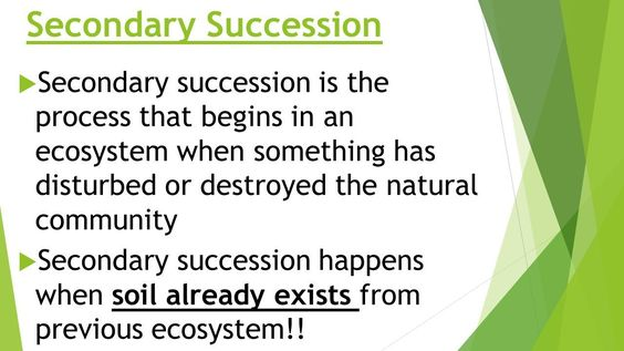 Ecological Succession Worksheet Answers Ecological Succession Ppt Video Online In 2020 Business Ethics Program Evaluation Link Building