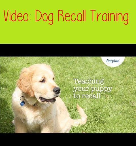 Dog Recall Training Puppy Training Tips Petplanprefer Text So