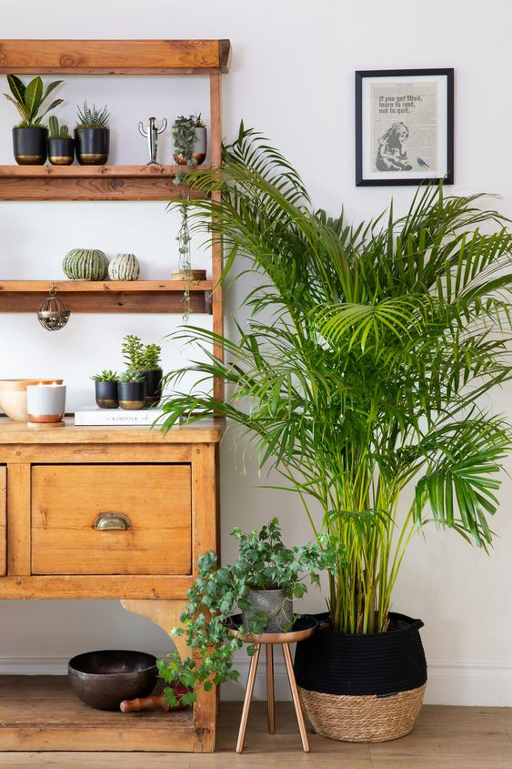 XL Areca Palm in Belly Basket | Little Botanical
