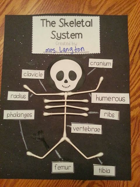 Love this FREEBIE on the skeletal system. Website for teaching about the bones included.