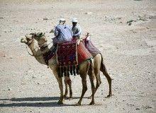 Turismo & Negócios » Egito