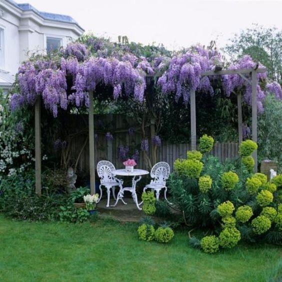 Stunning Wisteria Garden Plants