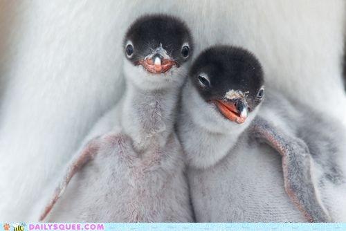 little baby penguins