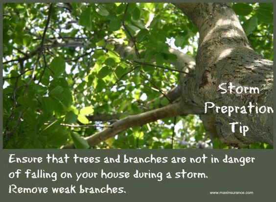 Storm preparation tip: Remove weak tree branches to ensure they do not fall on your home during a storm. #storm #prepare