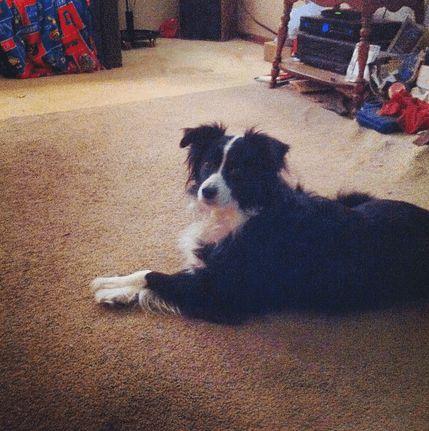 cachorros-cruzam-patas-18