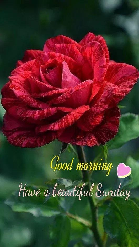 Good Morning Good Morning Happy Sunday Good Morning Nature Good Morning Flowers