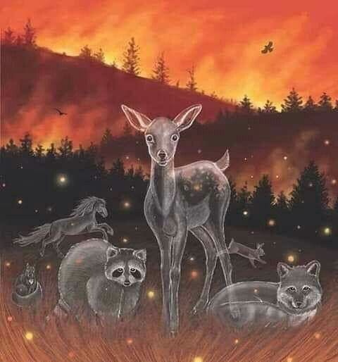 Pin By Evelyn Lara On Inclemencias De La Naturaleza Fire Drawing Animals Animal Art