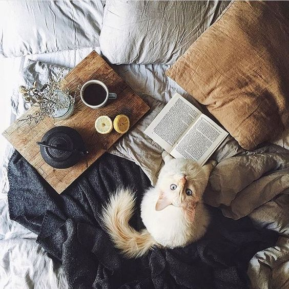 Cats, books, and bed. Three of my favorite things.